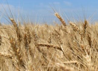 Maszyny rolnicze – nowe i używane